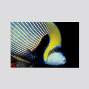 Emperor Angel Fish Rectangle Magnet