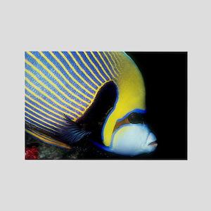 Emperor Angel Fish Rectangle Magnet