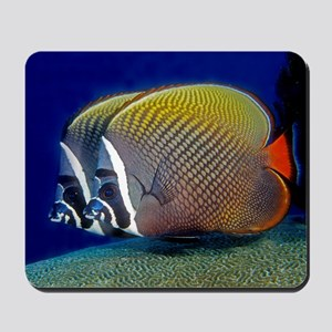 Red-tailed Butterfly Fish Mousepad