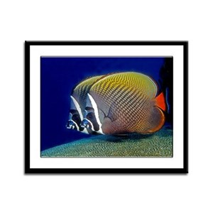 Red-tailed Butterfly Fish Framed Panel Print