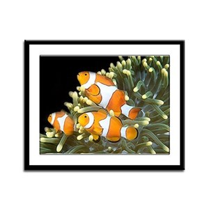 Clown Fish Trio Framed Panel Print