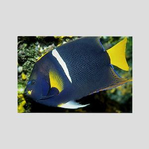 King Angel Fish Rectangle Magnet