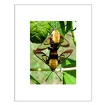 Mating Moths Small Poster