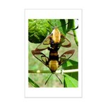 Mating Moths Mini Poster Print