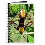 Mating Moths Journal