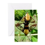 Mating Moths Greeting Cards (Pk of 20)