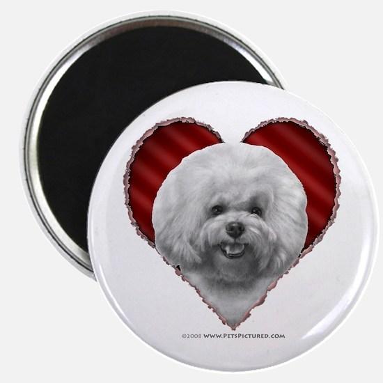 Bichon Valentine Magnet