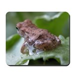 Frog on Leaf with Water Drop Mousepad