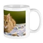 Muddlety and Fenway mug