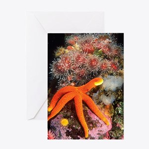 Starfish Scene Greeting Card