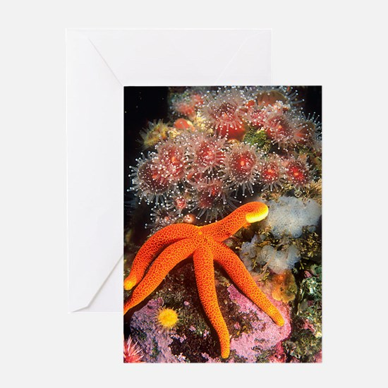 Starfish Scene Greeting Card