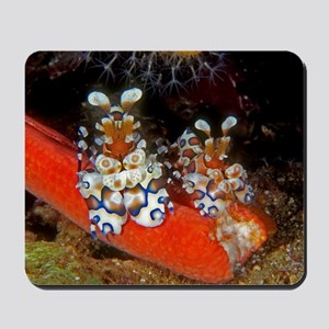 Harlequin Shrimp Mousepad