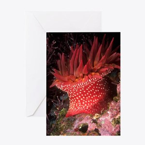 Rose Anemone Greeting Card