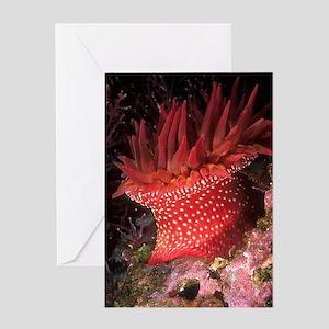 Rose Anemone Greeting Card