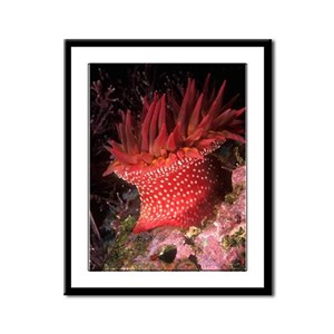 Rose Anemone Framed Panel Print