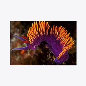 Spanish Shawl Nudibranch Rectangle Magnet