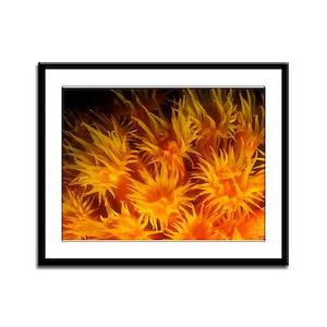 Orange Cup Corals Framed Panel Print