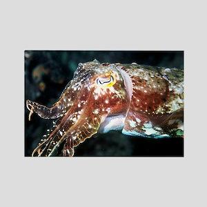 Cuttlefish Rectangle Magnet