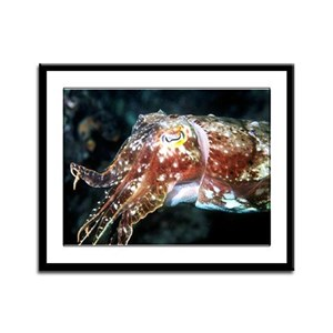 Cuttlefish Framed Panel Print