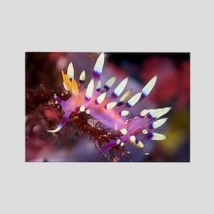 Nudibranch Rectangle Magnet