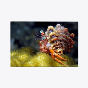 Funny Hermit Crab Rectangle Magnet