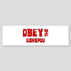 Obey the Cavapoo Bumper Sticker
