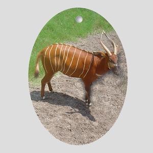 East African bongo Oval Ornament