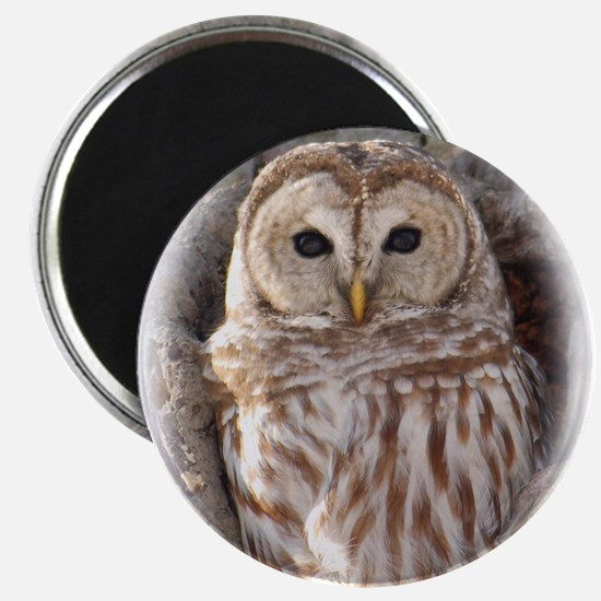 "Cute Owls 2.25"" Magnet (100 pack)"