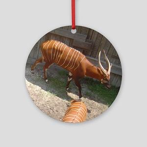 bongo at barn Ornament (Round)
