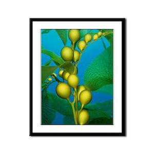 Kelp Close-Up Framed Panel Print