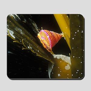 Kelp Bulbs Mousepad