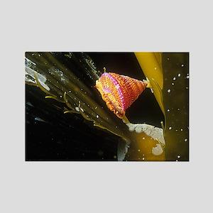 Kelp Bulbs Rectangle Magnet