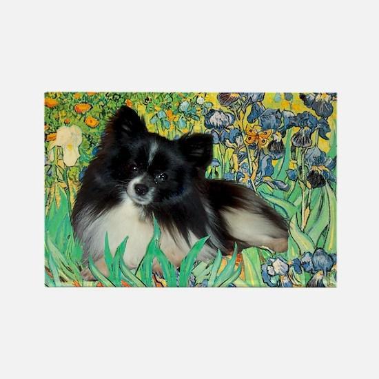 Irises / Pomeranian(bb) Rectangle Magnet
