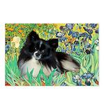 Irises / Pomeranian(bb) Postcards (Package of 8)