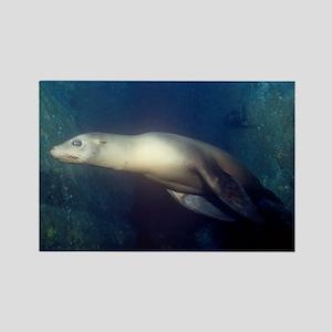 Sea Lion Rectangle Magnet