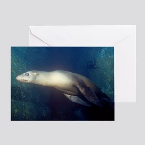 Sea Lion Greeting Card