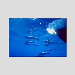 Spinner Dolphins Rectangle Magnet