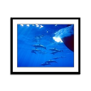 Spinner Dolphins Framed Panel Print