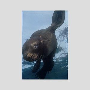 Sea Lion Pup Rectangle Magnet