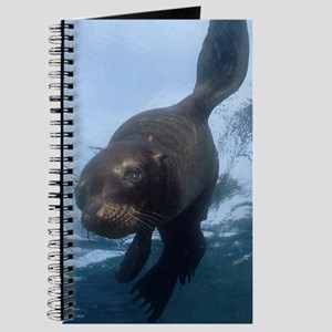 Sea Lion Pup Journal