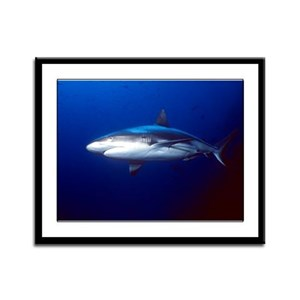 Shark Framed Panel Print