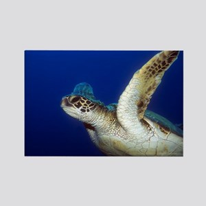 Flying Sea Turtle Rectangle Magnet