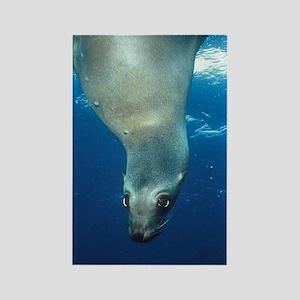 Upside-down Sea Lion Rectangle Magnet