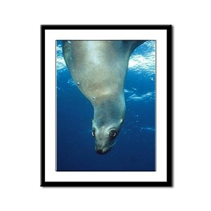 Upside-down Sea Lion Framed Panel Print