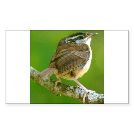 Carolina Wren Rectangle Sticker