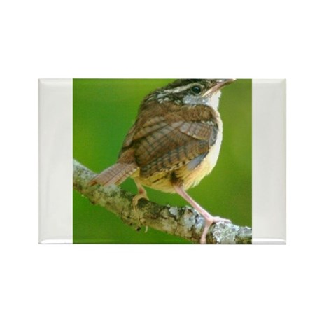 Carolina Wren Rectangle Magnet (10 pack)