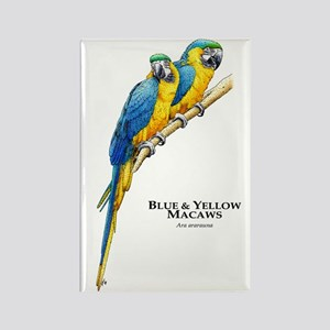 Blue & Yellow Macaws Rectangle Magnet