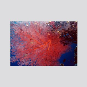 Red Soft Coral Rectangle Magnet