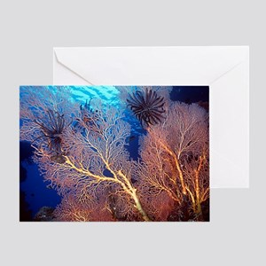 Sea Fan Scenic Greeting Card