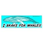 Whales Bumper Sticker